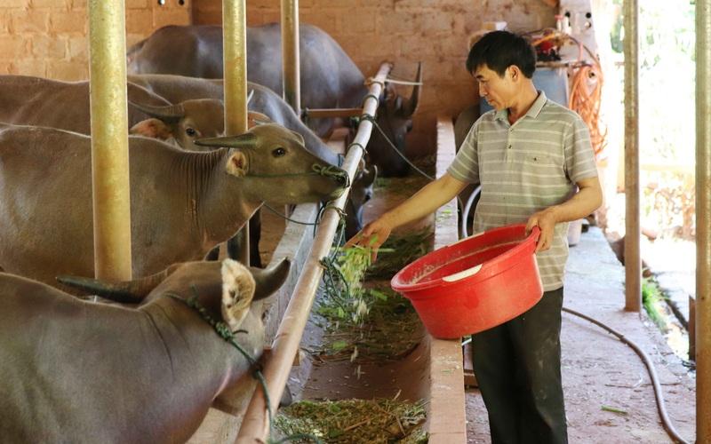 Hội Nông dân Sơn La: Làm tốt các hoạt động dạy nghề, hỗ trợ nông dân
