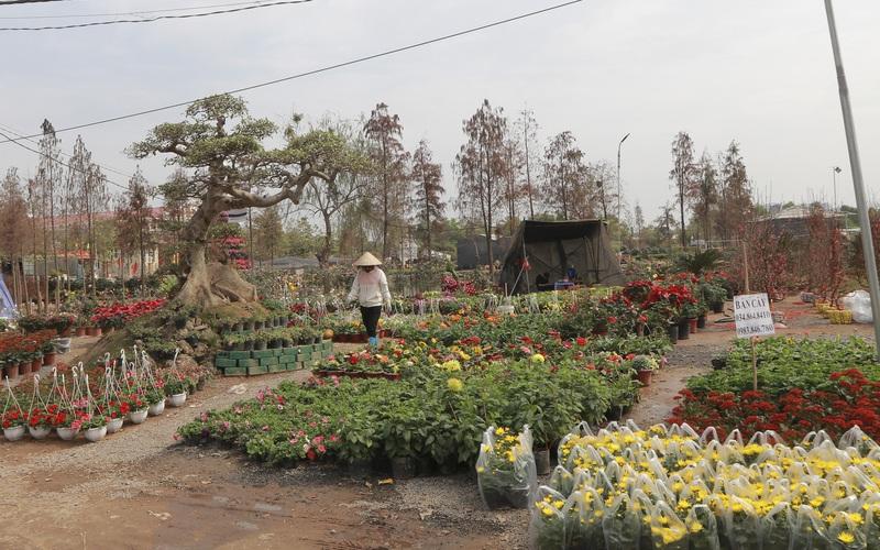 """Dịch COVID-19 bùng phát khiến nhà vườn, người bán hoa """"sốt ruột"""" lo ế ở làng hoa Xuân Quan"""