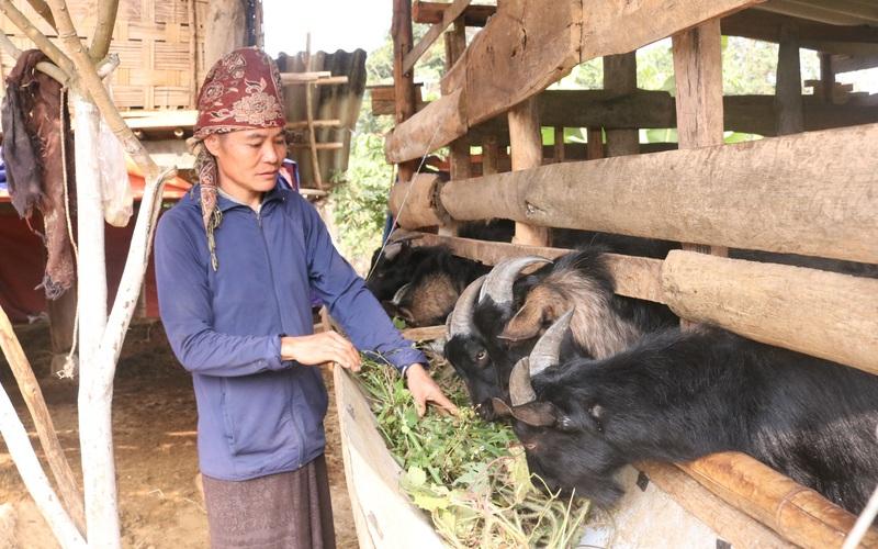 Mường Sại chú trọng phát triển chăn nuôi