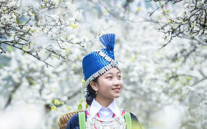 Mê mẩn với những đồi hoa mận nở trắng tinh khôi ở miền Tây Nghệ An, Mộc Châu, Vân Hồ…