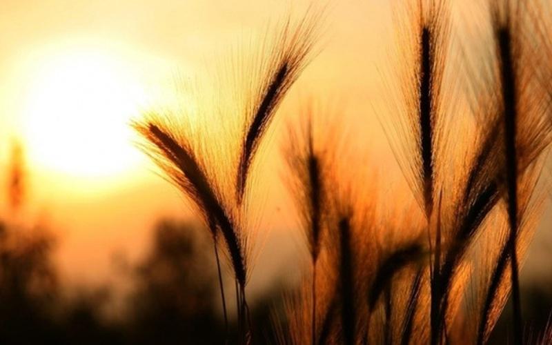 Xuất khẩu ngũ cốc của Nga đạt mức cao kỷ lục