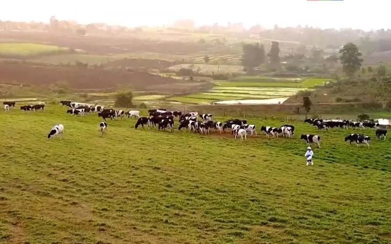 An Giang: Kỳ vọng dự án chăn nuôi bò sữa và chế biến sữa công nghệ cao lớn nhất đồng bằng sông Cửu Long