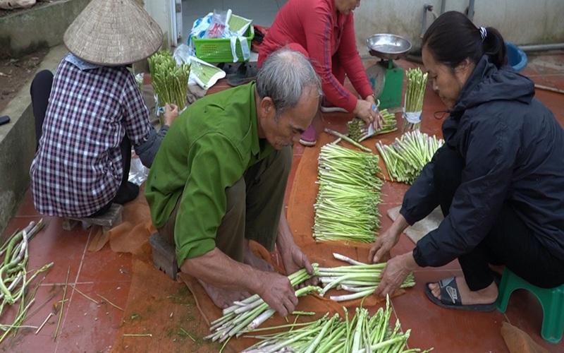 """Một số lưu ý khi trồng măng tây giúp nông dân """"mở mắt thu tiền triệu mỗi sáng"""""""