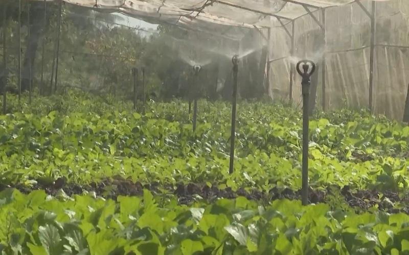 Áp dụng công nghệ 4.0 trồng rau sạch, anh nông dân ung dung thu về 200 triệu/năm