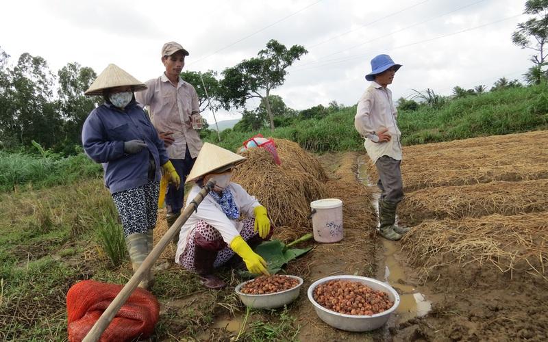 Phú Yên: Dồi dào nguồn vốn cho vay tín dụng chính sách, thoát nghèo