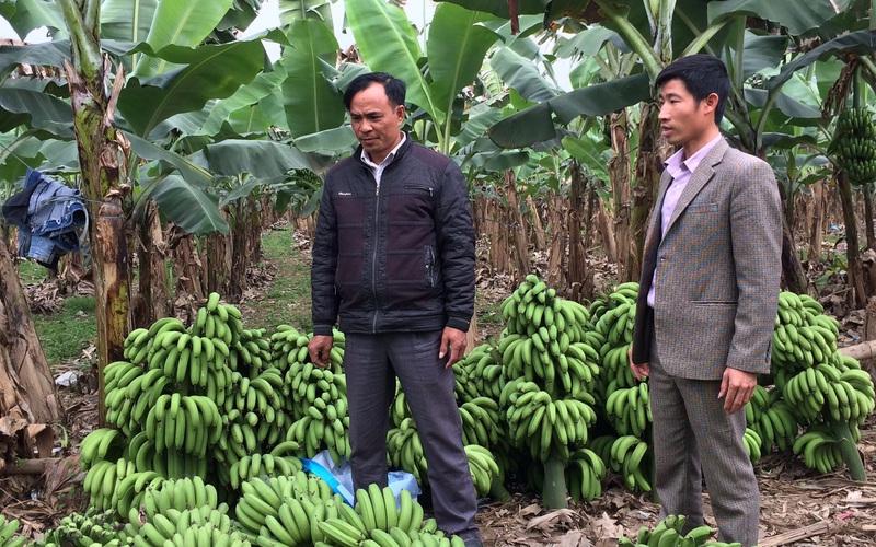 Yên Bái: Nông dân làm kinh tế trang trại đều là những hộ khá giàu