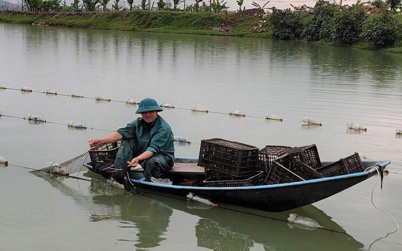 """Clip: Ông nông dân Hà Tĩnh thành """"cự phú"""" nhờ mô hình nuôi trai lấy ngọc"""