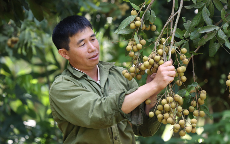 Sơn La: Thu bình quân 200 triệu đồng/1 ha cây ăn quả