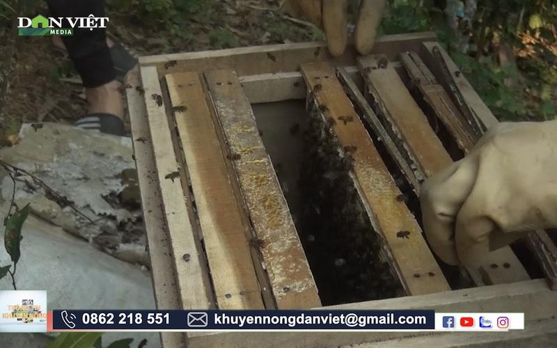 Hòa Bình: Cựu chiến binh U70 thành tỷ phú nhờ nuôi ong lấy mật