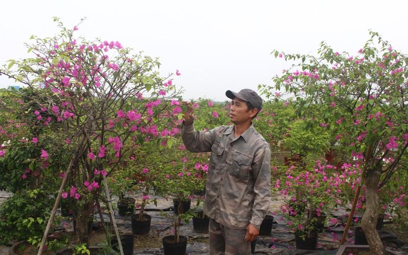 Hà Nội: Biến loài hoa mỏng manh thành nghề mũi nhọn, nông dân Phù Đổng thu hơn 82 tỷ/năm