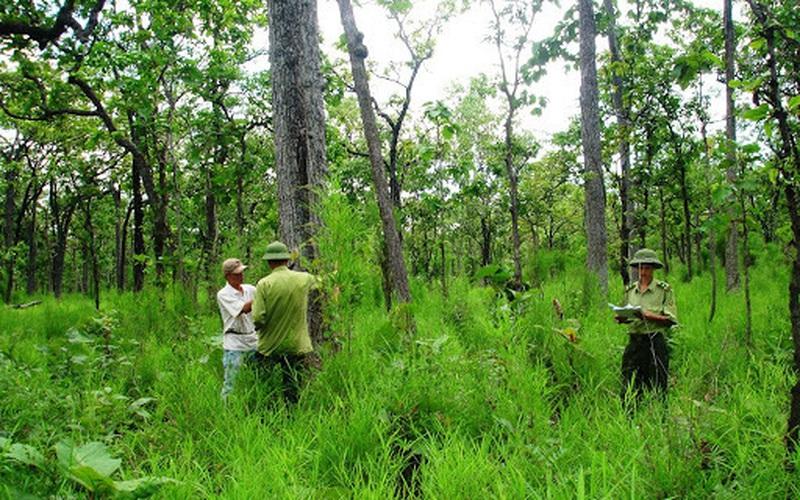 Video: Về thủ phủ gỗ nghiến ở Điện Biên tận mắt thấy tài nguyên vàng được bảo vệ nghiêm ngặt