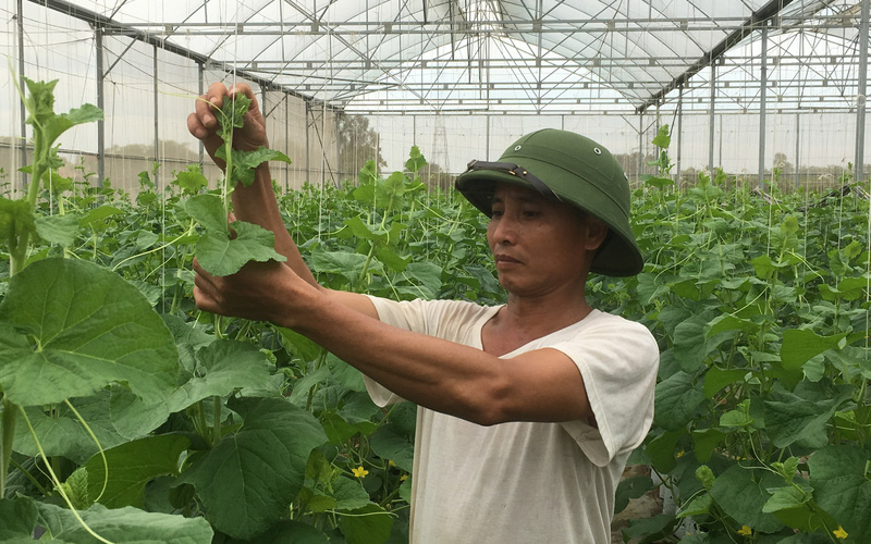 Thanh Hoá: Bỏ trồng lúa, nông dân Thiệu Hóa nuôi trồng toàn cây con đặc sản, lãi gấp 5, gấp 7