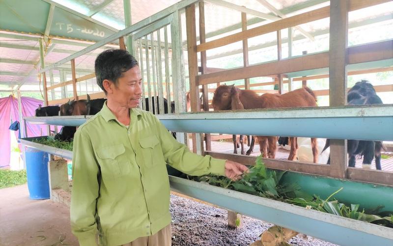 """Lão nông Nghệ An chỉ nuôi con kêu """"bê bê"""" mà lãi hàng trăm triệu đồng mỗi năm"""
