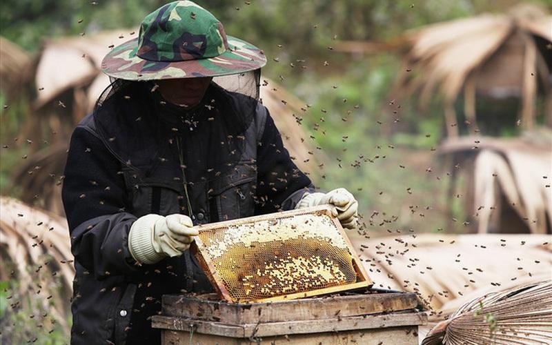 """Điện Biên: Thuần dưỡng """"lộc rừng"""", nông dân Chà Nưa thu tiền tỷ mỗi năm"""