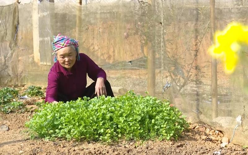 Sơn La: Mở hướng thoát nghèo ở vùng tái định cư