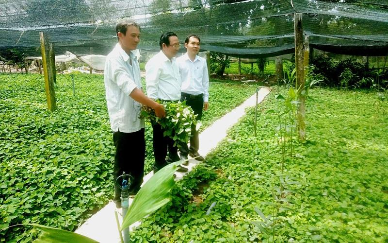 """Nông dân trồng """"rau làm giàu"""" ở tỉnh Tiền Giang và tỉnh Long An hối hả bơm trữ nước ngọt đề phòng điều này"""