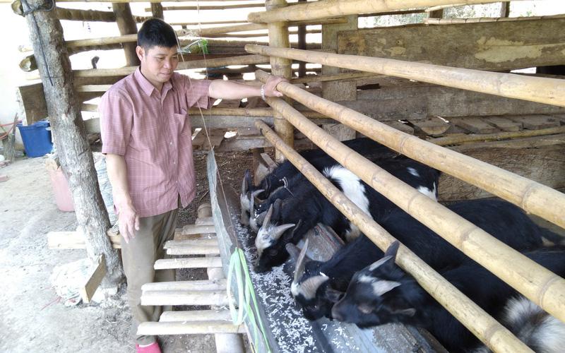 Sơn La: Nuôi con lông đen, ăn được lá ngón, mấy năm liền chưa hề mất giá, một ông nông dân mỗi ngày giàu thêm