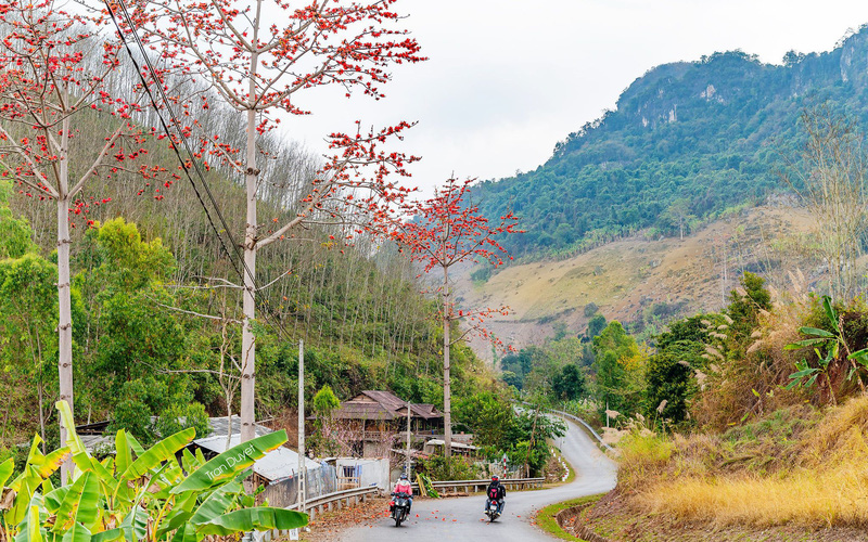 Đẹp mê li mùa hoa gạo đỏ rực bên dòng sông Đà huyền thoại khi qua miền Tây Bắc