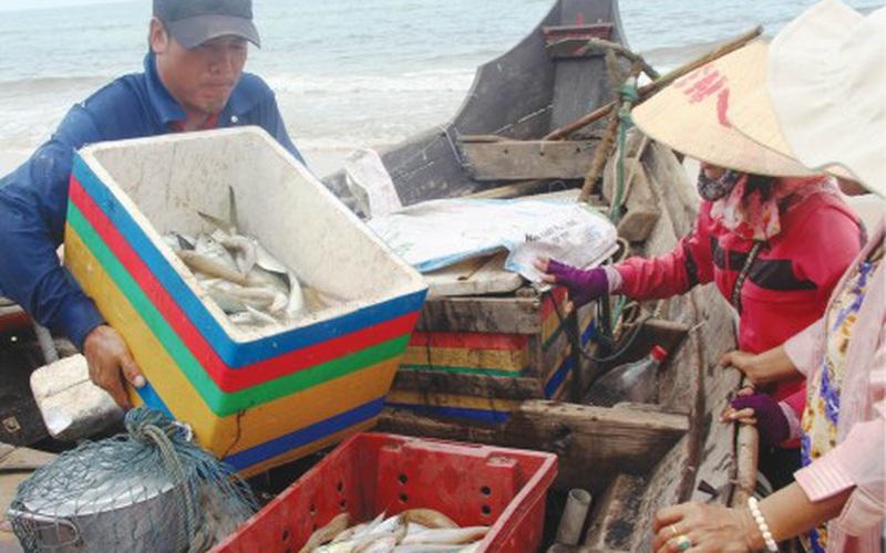 """Huế: Liên tục trúng """"số"""", mẻ nào cũng đầy hự cá trích, khuyết, cá khoai, ngư dân nhẹ nhàng đút túi vài triệu/ngày"""