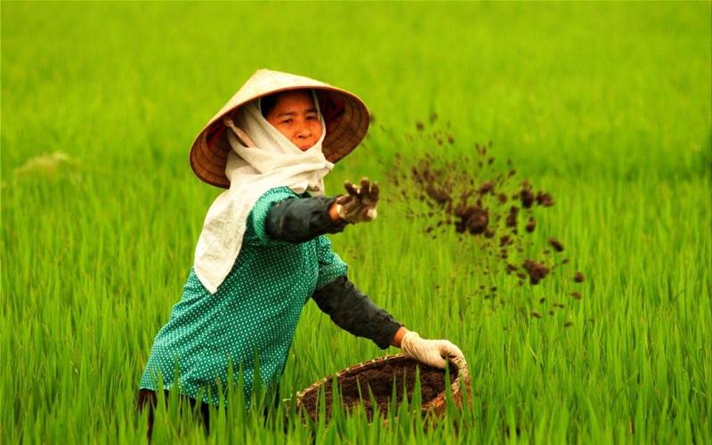 """Chi phí trồng trọt tăng vì giá phân bón """"phi mã"""", nông dân chịu nhiều bất lợi"""