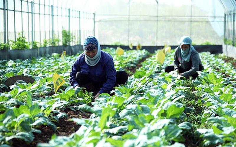 Quy hoạch vùng sản xuất nông nghiệp Thủ đô: Nhiều điểm sáng được mở ra