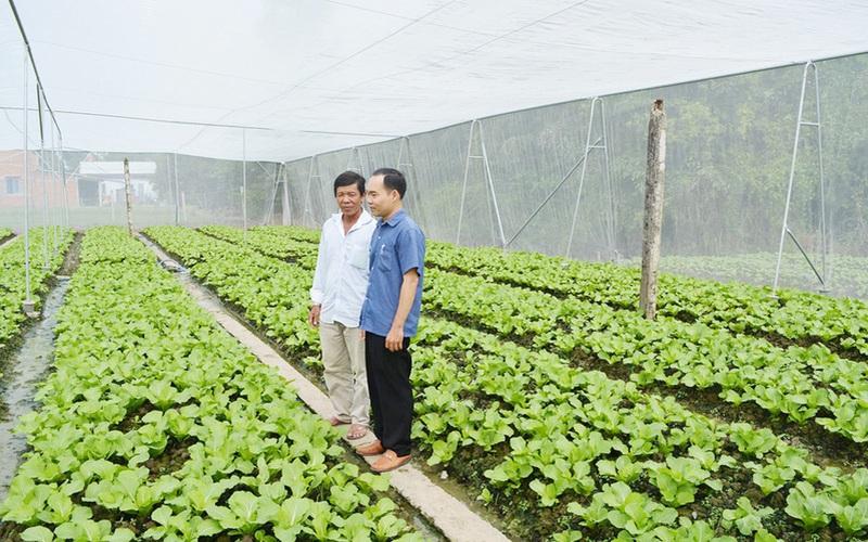 Long An: Trồng rau công nghệ cao, nông dân thu tiền triệu mỗi ngày