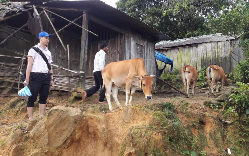 Quảng Nam: Có vốn ưu đãi, người nghèo từng bước vươn lên làm giàu