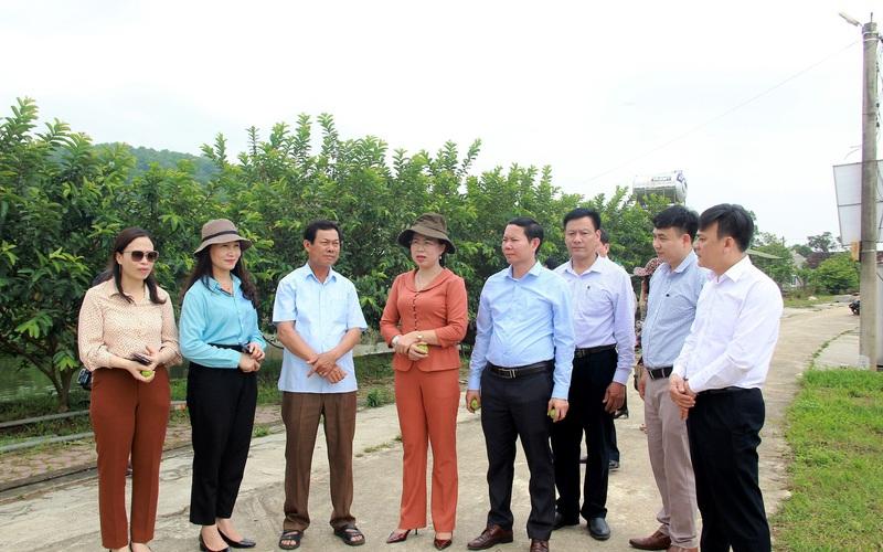 Hà Tĩnh: Mô hình nông nghiệp công nghệ cao cho nông dân lãi tiền tỷ