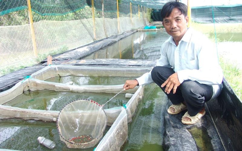 Nuôi cá kiểng la liệt trên cạn, bán cá kiểu bấm mỏi cả tay, một ông nông dân TP HCM cũng mỏi tay đếm tiền