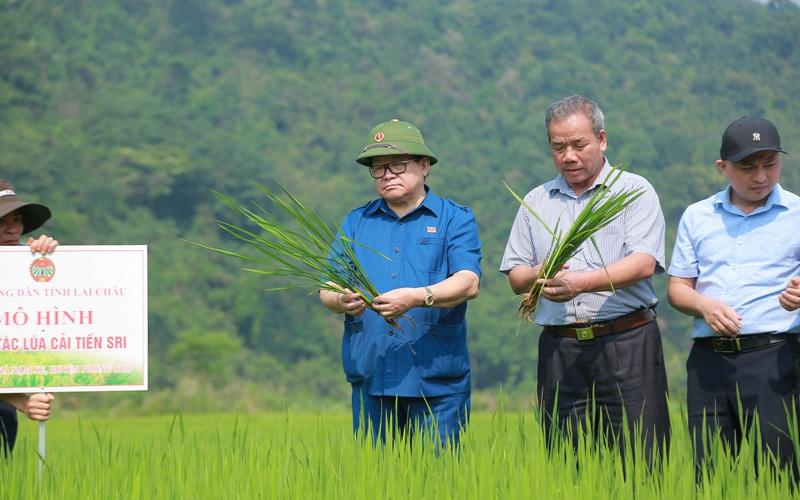 Đồng chí Thào Xuân Sùng: Mô hình trồng lúa cải tiến của xã Nậm Xe là hướng đi mới rất đáng học tập