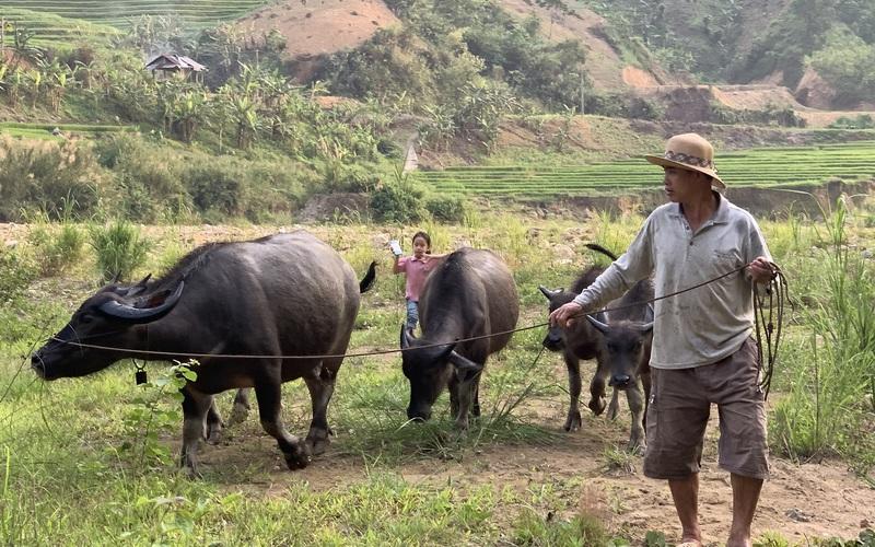 Lão nông Vàng San bền gan xoá nghèo