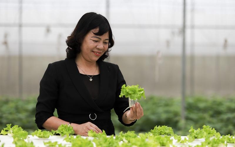 Chị nông dân Ninh Bình thu tiền chục tỷ nhờ trồng rau sạch ứng dụng công nghệ cao