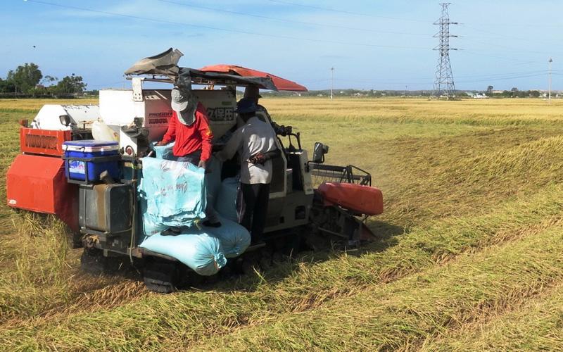 Bình Định: Vụ lúa đông xuân trúng đậm, nông dân còn đón tin vui bất ngờ