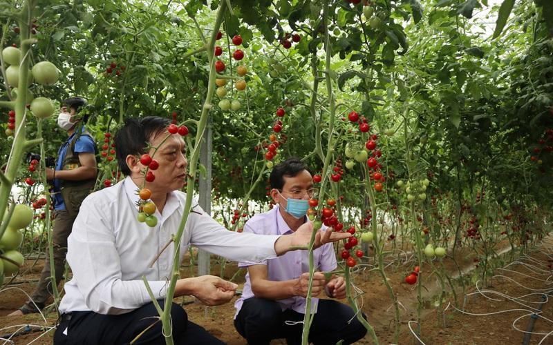 Hội Nông dân Nghệ An sẽ dựng 4 mô hình điểm về sản xuất, chế biến nông sản an toàn