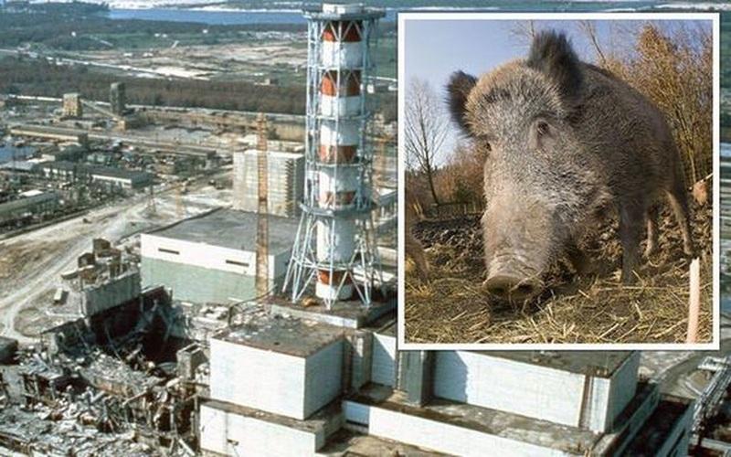 35 năm sau thảm họa, Chernobyl giờ đã an toàn hay chưa?