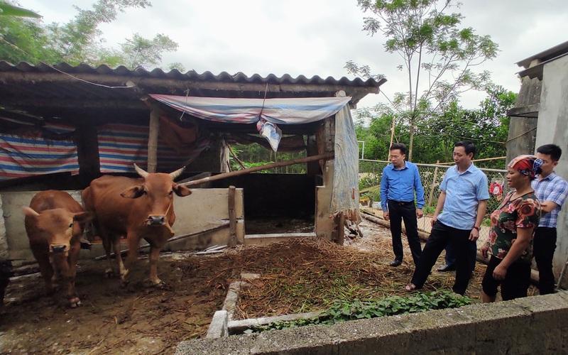 Thái Nguyên: Bệnh viêm da nổi cục trên trâu, bò gia tăng