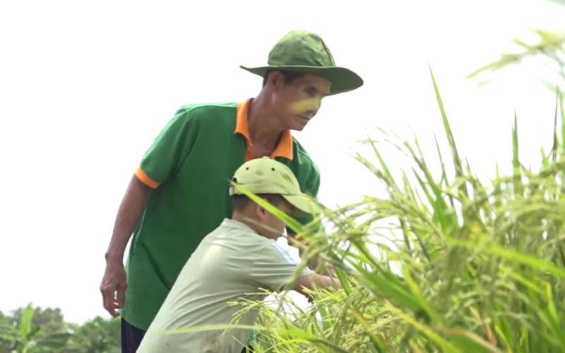 """Đồng Tháp: Lão nông trồng lúa, """"thuận thiên"""" từ mô hình  canh tác hữu cơ"""
