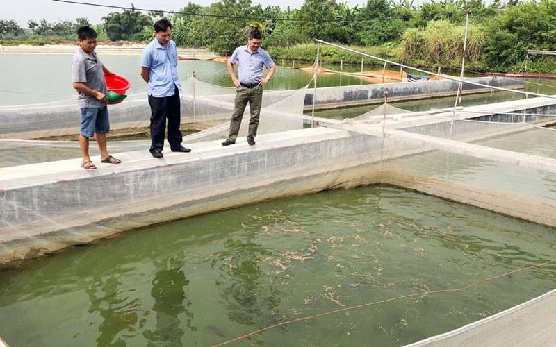 Bắc Ninh: Nuôi nhiều loài cá mới lạ, nông dân giàu lên