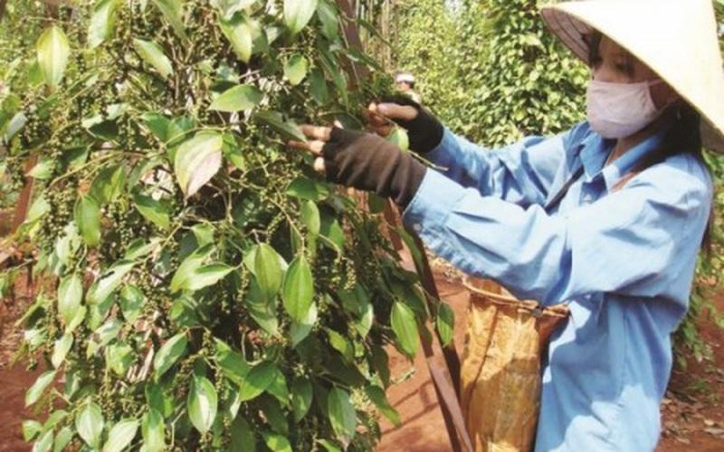 Nông sản Việt tăng giá và tăng tiềm năng xuất khẩu nhờ áp dụng công nghệ chế biến