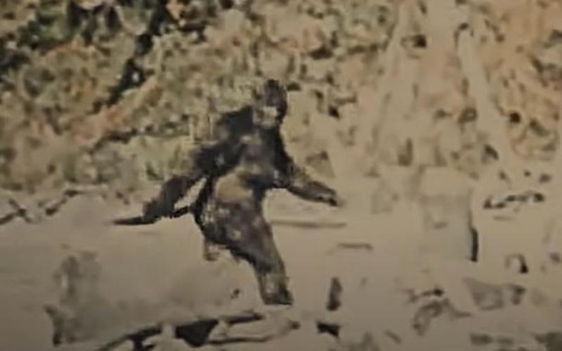 Huyền thoại Bigfoot xuất hiện trong vụ thảm sát tại trang trại trồng cần sa