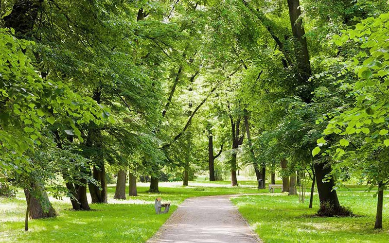 Các thành phố ở Mỹ đối diện với nỗi lo mất 36 triệu cây xanh mỗi năm