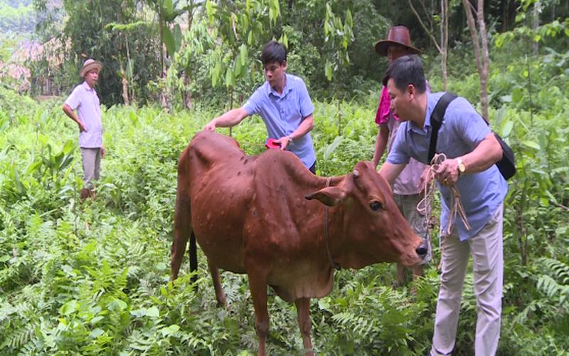 Yên Bái: Thêm một xã ở Lục Yên xuất hiện bệnh viêm da nổi cục