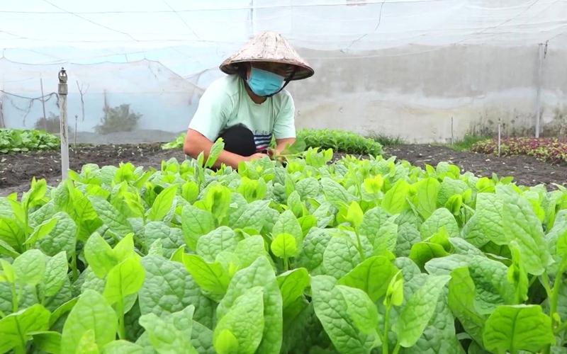 Đồng Nai: Những vườn rau 0 đồng mang nặng nghĩa tình của nông dân