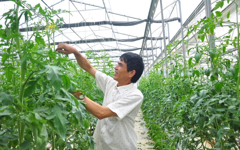 """Chuyển đổi số trong nông nghiệp ở Lâm Đồng (bài 1): Nông dân, doanh nghiệp đều tham gia """"cuộc chơi"""" công nghệ"""