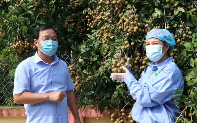 Tăng tốc khôi phục sản xuất nông nghiệp sau dịch (bài cuối): Đảm bảo đủ lương thực phục vụ trong nước và xuất khẩu