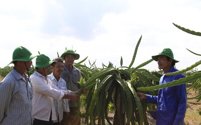 Sẽ có nghị định riêng về phát triển hợp tác xã nông nghiệp