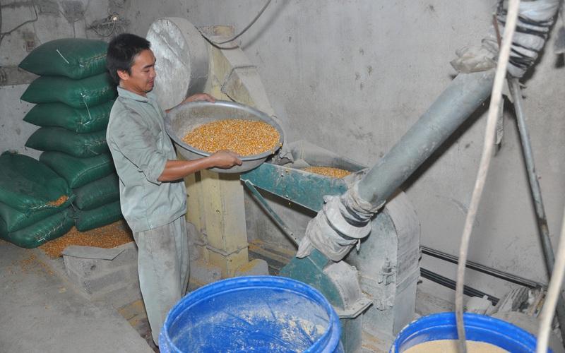 Nóng: Cục Chăn nuôi dự báo giá thức ăn chăn nuôi cuối năm vẫn tiếp tục tăng