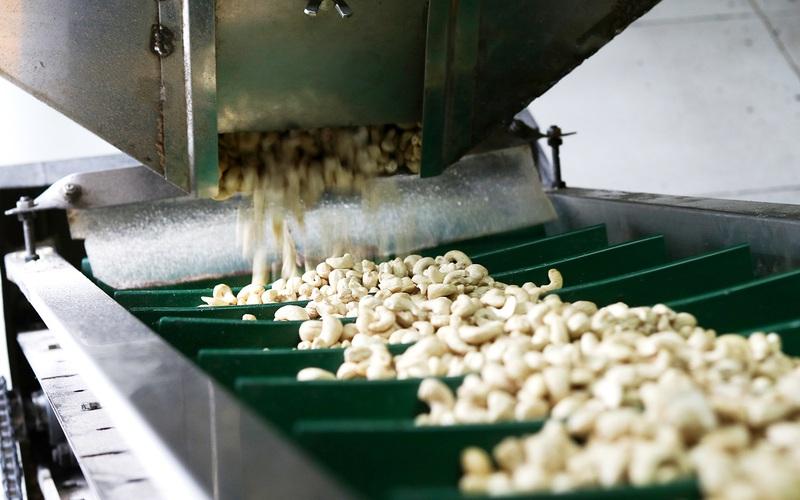 Mặc dù bị dịch Covid-19, xuất khẩu nông sản 9 tháng năm 2021 đạt mốc kỷ lục 35,5 tỷ USD: Các loại hạt lên ngôi