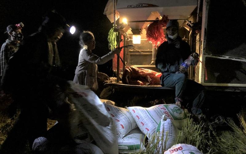 """Về Hà Tĩnh xem bà con nông dân """"trốn nắng"""", gặt lúa xuyên đêm"""