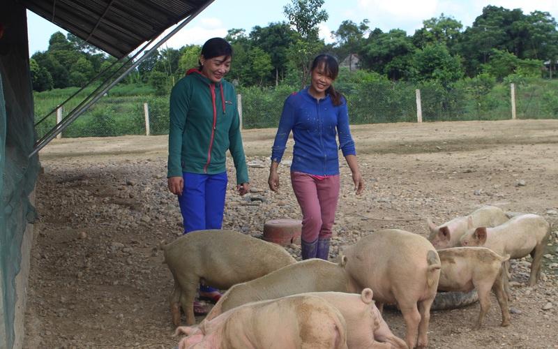 """Hà Tĩnh"""": Giúp nông dân trẻ có vốn làm kinh tế trang trại"""